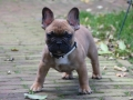 Lucca-pup-1