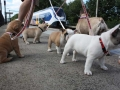 Pups2012-week8-10