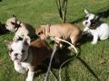 Pups2012-week8-13