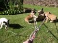 Pups2012-week8-14