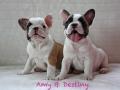 Pups2012-week8-16