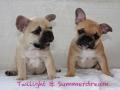 Pups2012-week8-17