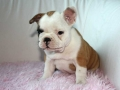 Pups2012-week8-18