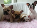 Pups2012-week8-19