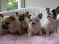 Pups2012-week8-20