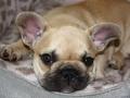 Pups2012-week8-21