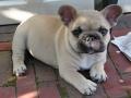Pups2012-week8-5