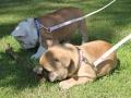 Pups2012-week8-6