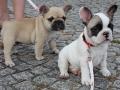 Pups2012-week8-9