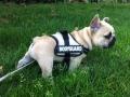 Pups2012-week9-1