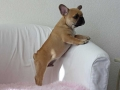 Pups2012-week9-4