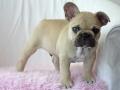 Pups2012-week9-5