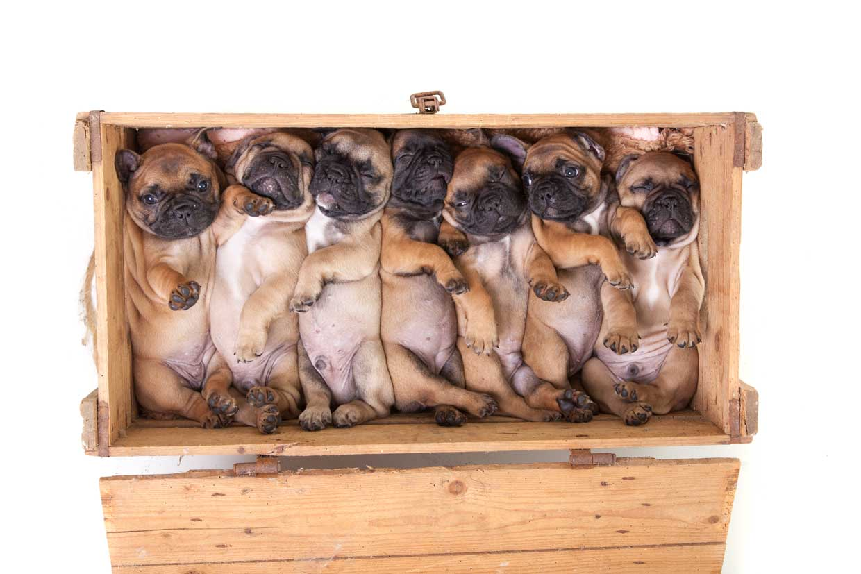 pups-kist