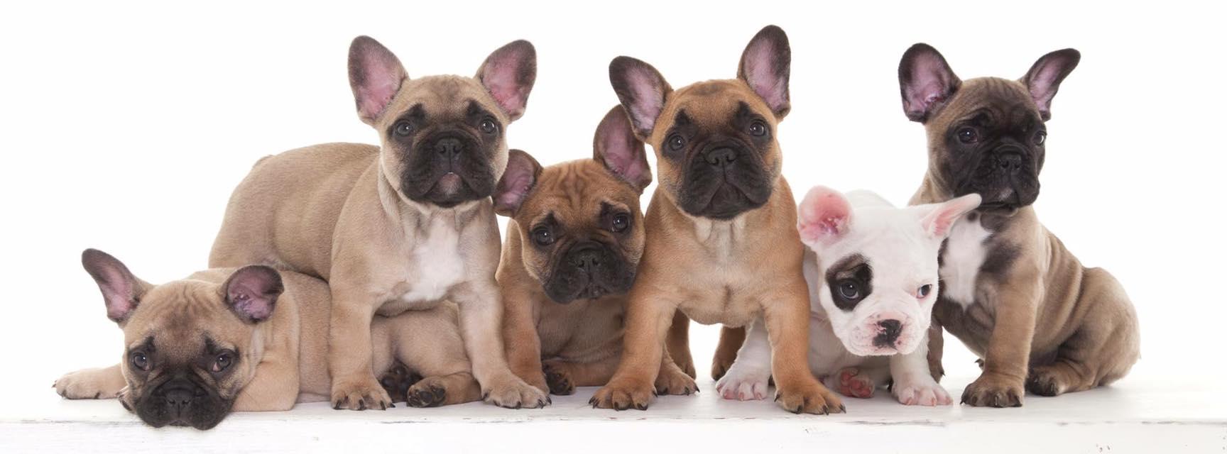 Pups Balou 2016