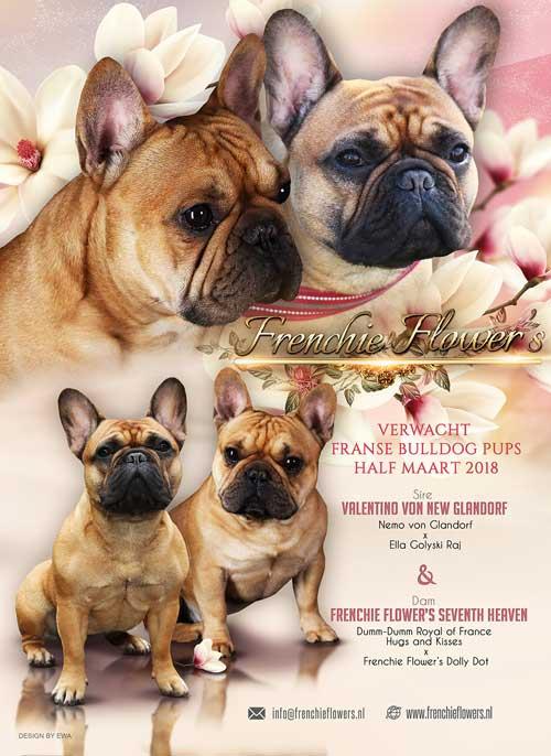 Pups-aankondiging-Pixer