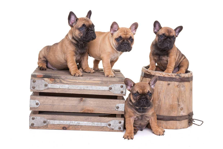 Fotoshoot-pups-Pixer-1